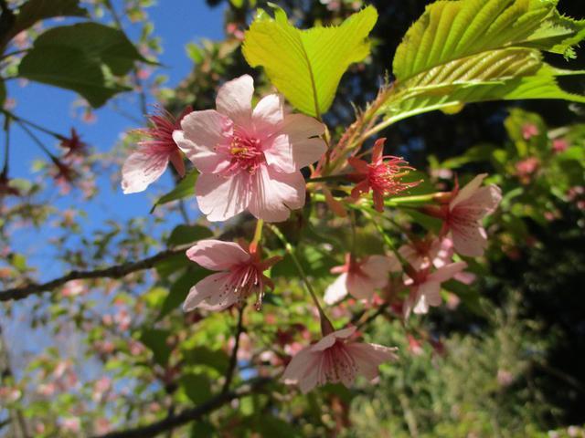 画像1: 3月5日から山旅会 「田原アルプスと神石山」 ツアーに行ってきました!