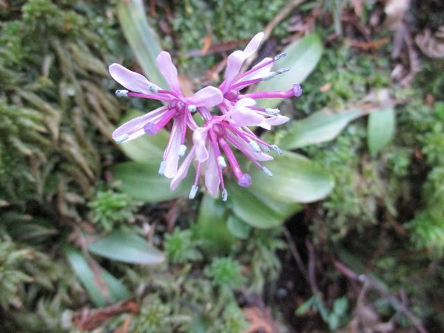 画像14: 3月5日から山旅会 「田原アルプスと神石山」 ツアーに行ってきました!