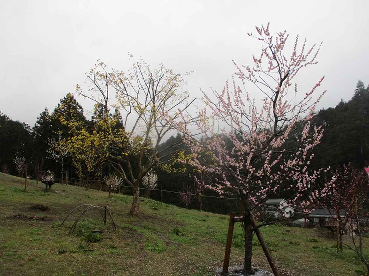 画像13: 4月の山旅会現地集合コース 天狗岩から要害山 の下見に行ってきました!