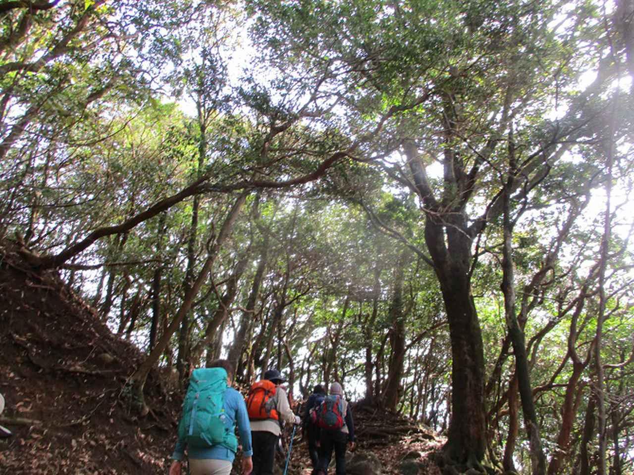 画像3: 3月13日に山旅会 「岩戸山」 ツアーに行ってきました!