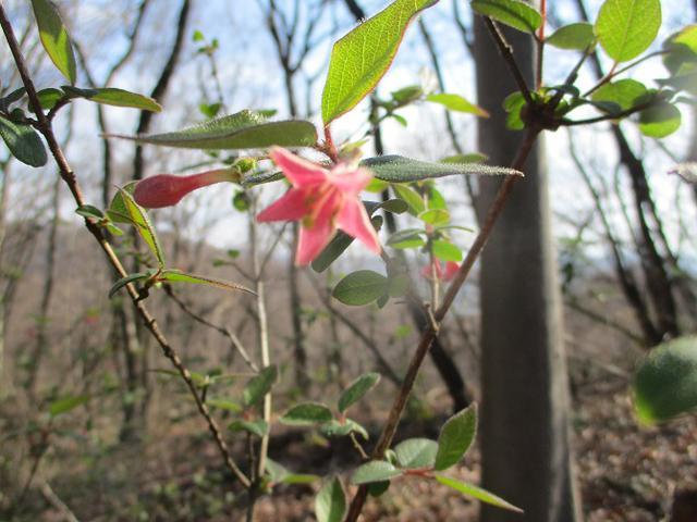 画像9: 3月の山旅会 三毳(みかも)山ツアー の下見に行ってきました!