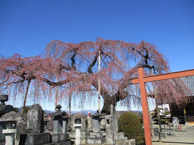 画像12: 4月の山旅会 神成山 の下見に行ってきました!