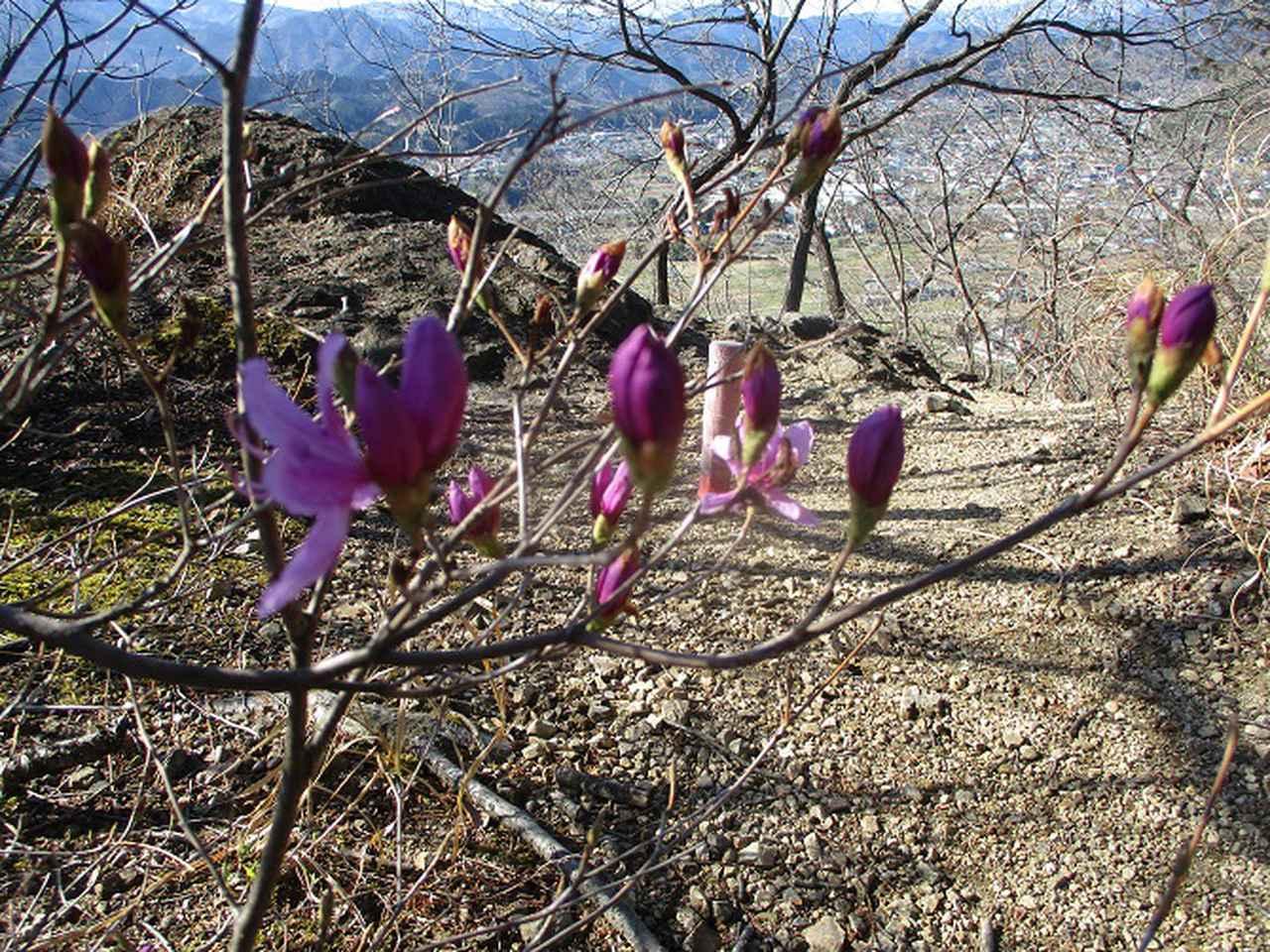 画像4: 4月の山旅会 神成山 の下見に行ってきました!