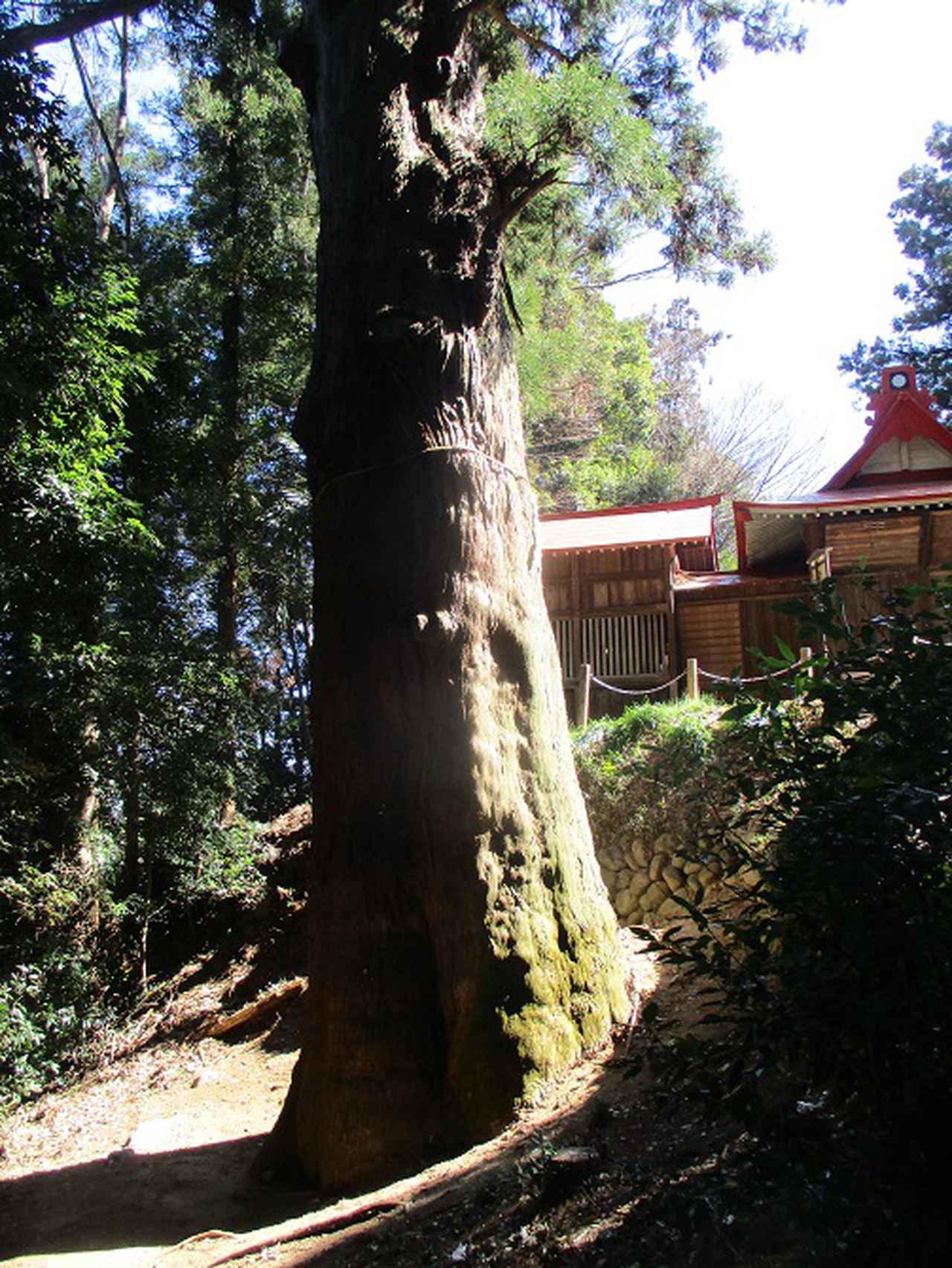 画像11: 4月の山旅会 神成山 の下見に行ってきました!