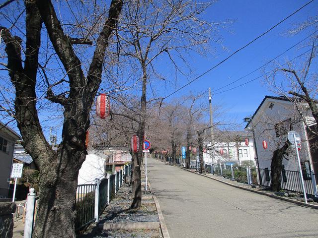 画像13: 4月の山旅会 神成山 の下見に行ってきました!