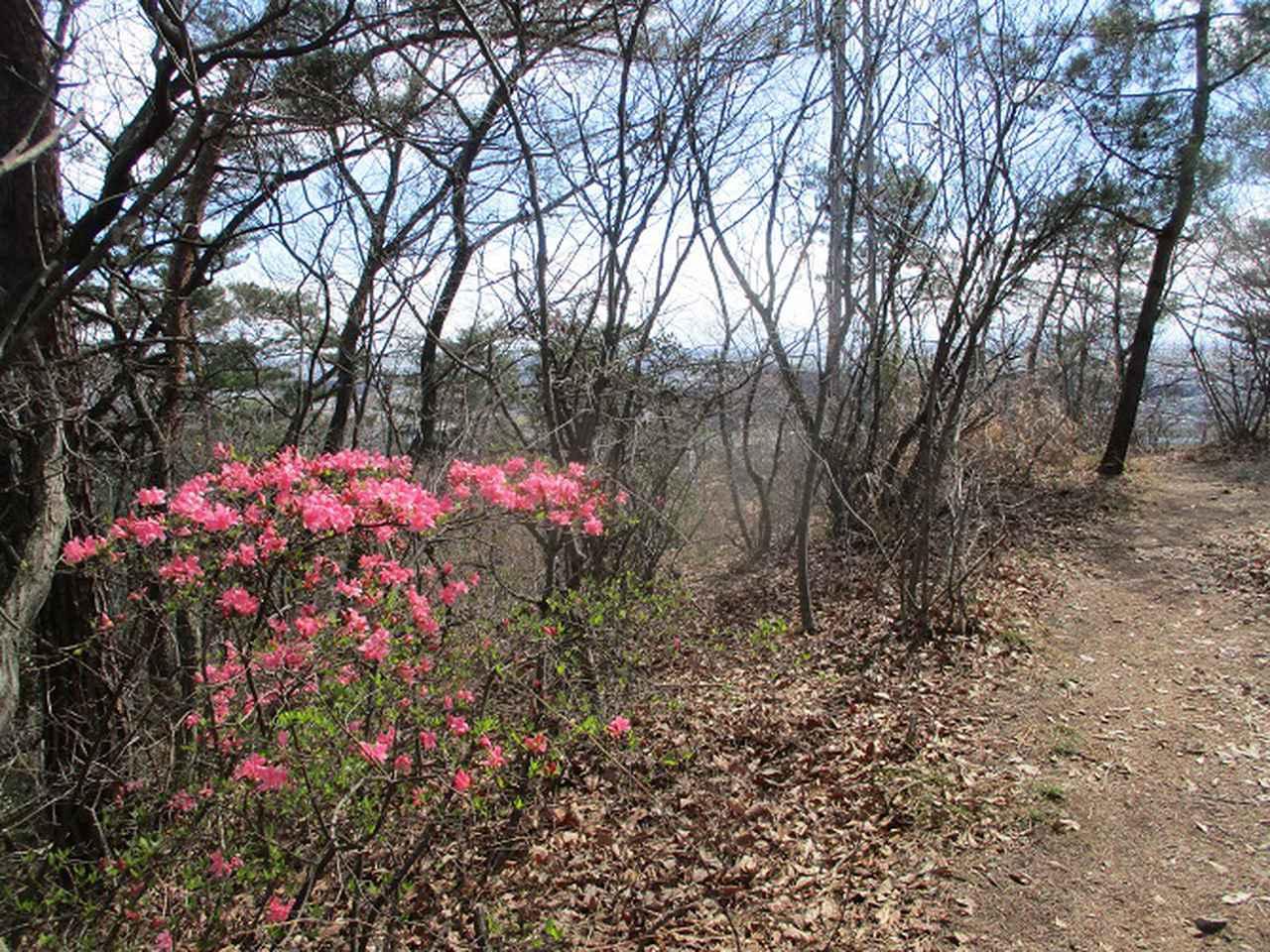 画像10: 4月の山旅会 両崖山から天狗山 ツアーの下見に行ってきました!