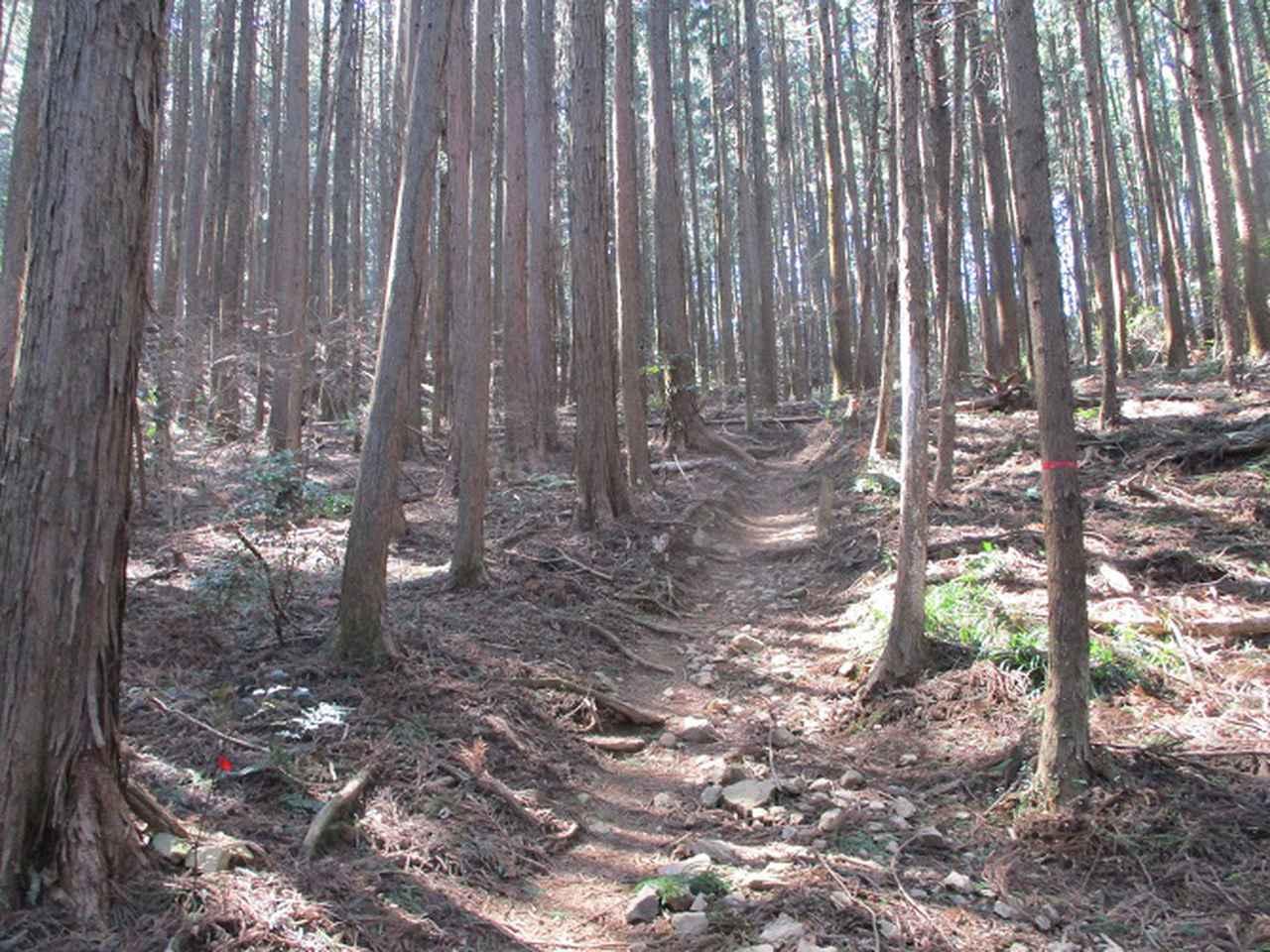画像1: 企画素材を探して西武線沿線の 大高山から天覚山 を歩いてみました!
