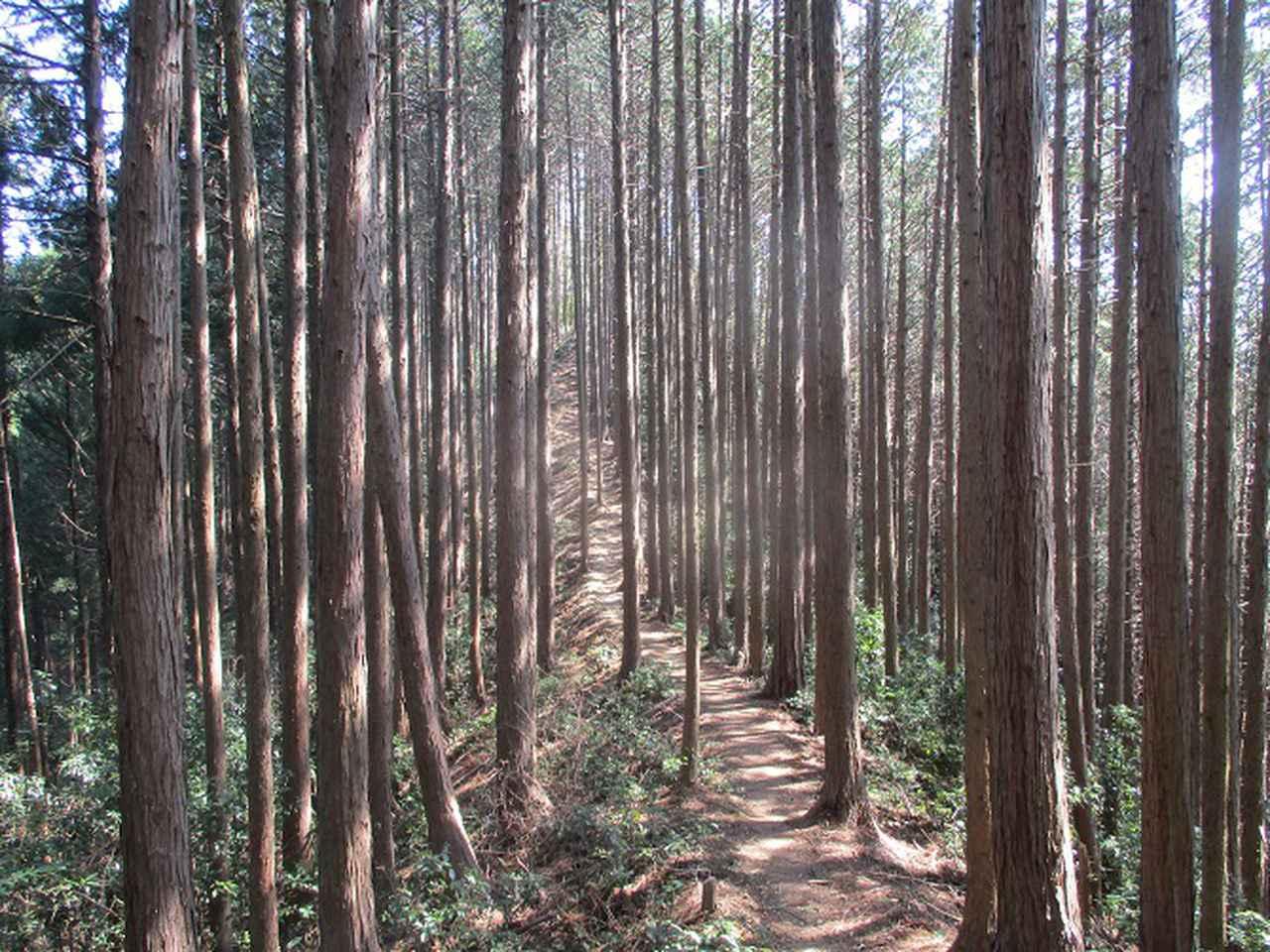 画像3: 企画素材を探して西武線沿線の 大高山から天覚山 を歩いてみました!