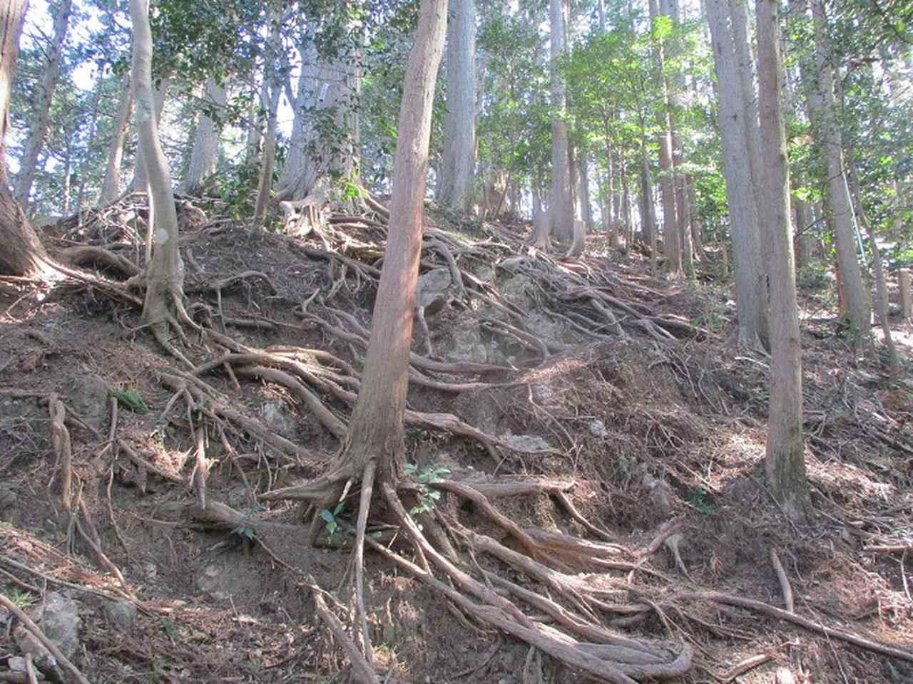 画像5: 企画素材を探して西武線沿線の 大高山から天覚山 を歩いてみました!