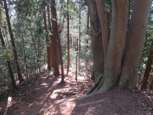 画像7: 企画素材を探して西武線沿線の 大高山から天覚山 を歩いてみました!