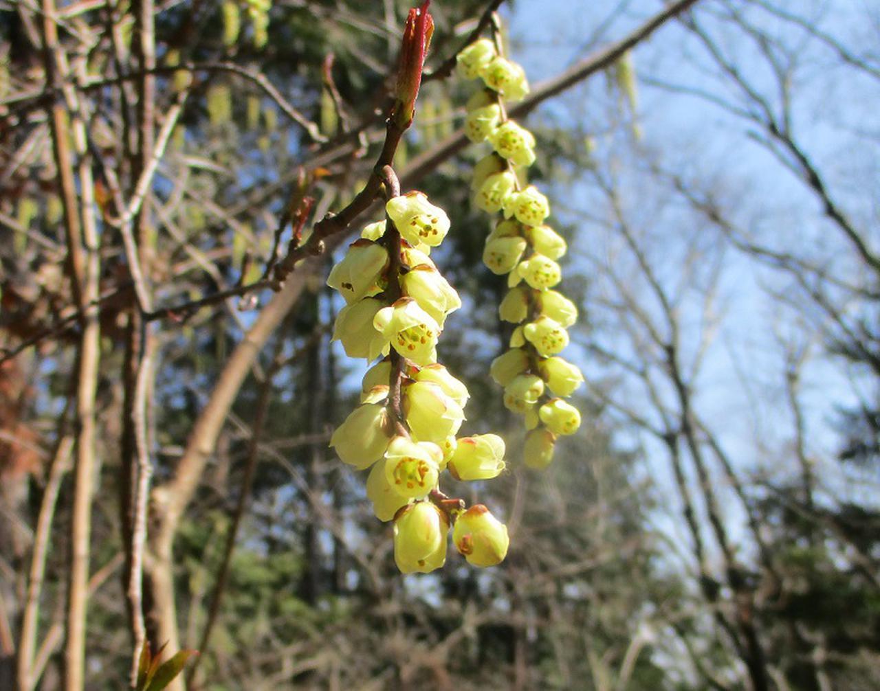 画像8: 4月の山旅会・現地集合ツアー西山峠から草戸山ツアーの下見に行ってきました!