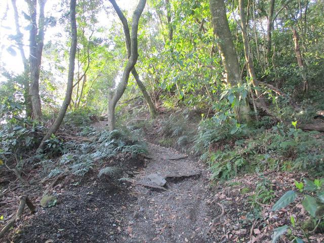 画像3: 来年春の企画素材を探して鹿児島県の 開聞岳 に行ってきました!