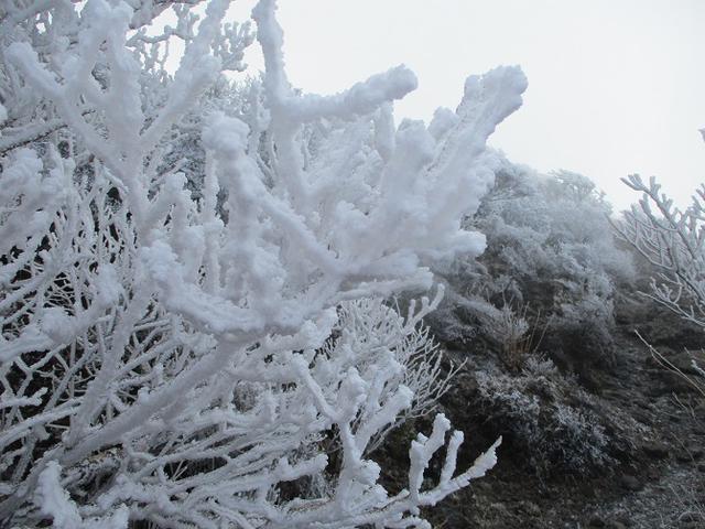 画像3: 来年春の企画素材をさがして九州の 韓国岳 に行ってきました!