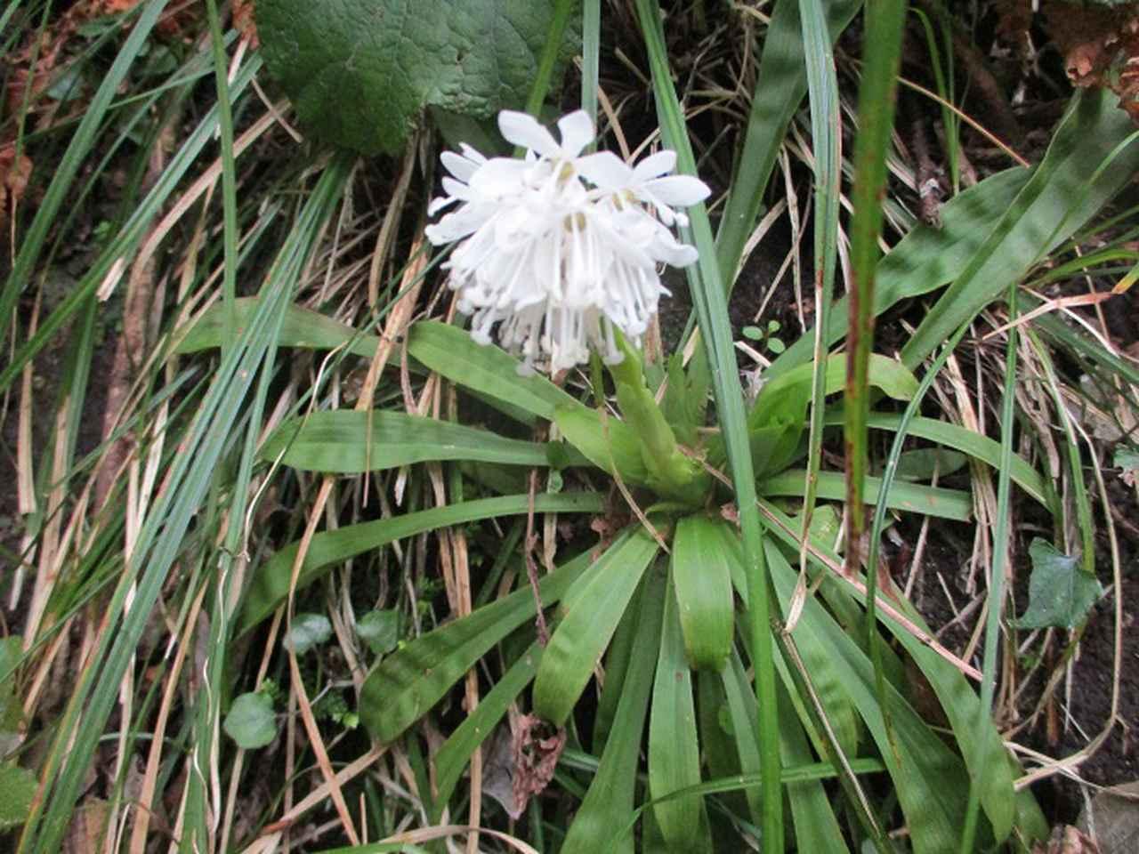 画像10: 来年春の企画素材を探して鹿児島県の 開聞岳 に行ってきました!