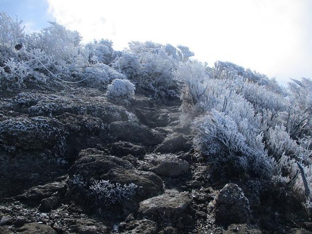 画像4: 来年春の企画素材をさがして九州の 韓国岳 に行ってきました!