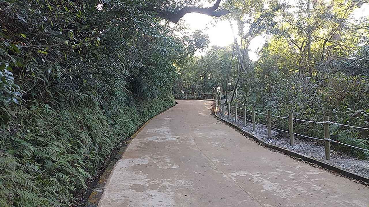 画像2: 来年春の企画の素材を探して鹿児島の 城山 に行ってきました!