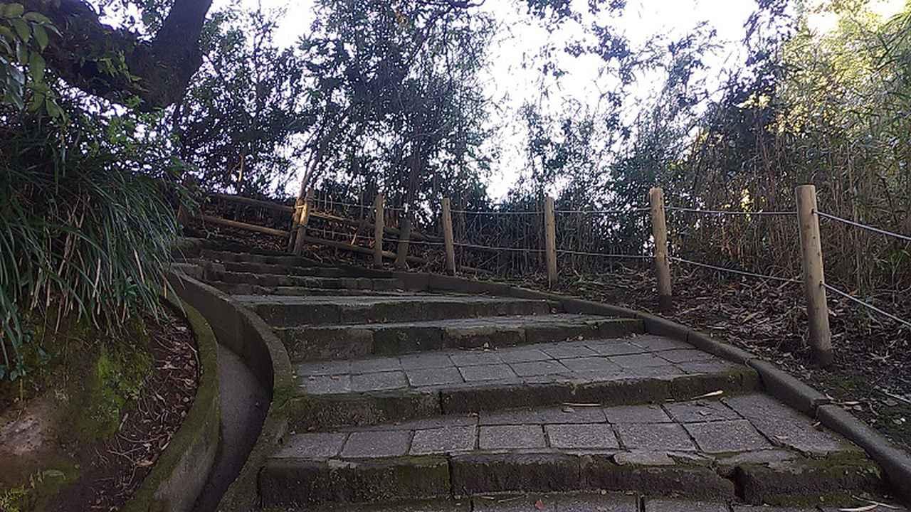 画像1: 来年春の企画の素材を探して鹿児島の 城山 に行ってきました!