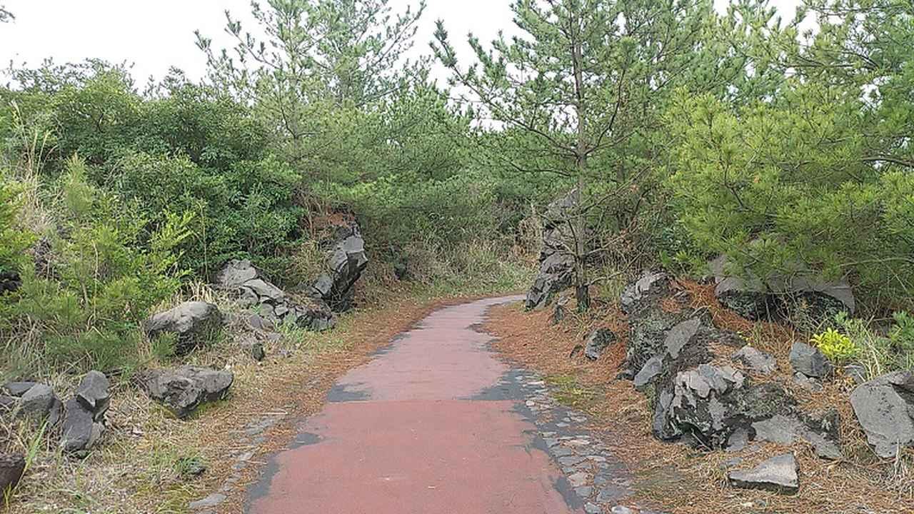 画像9: 来年春の企画の素材を探して鹿児島の 城山 に行ってきました!