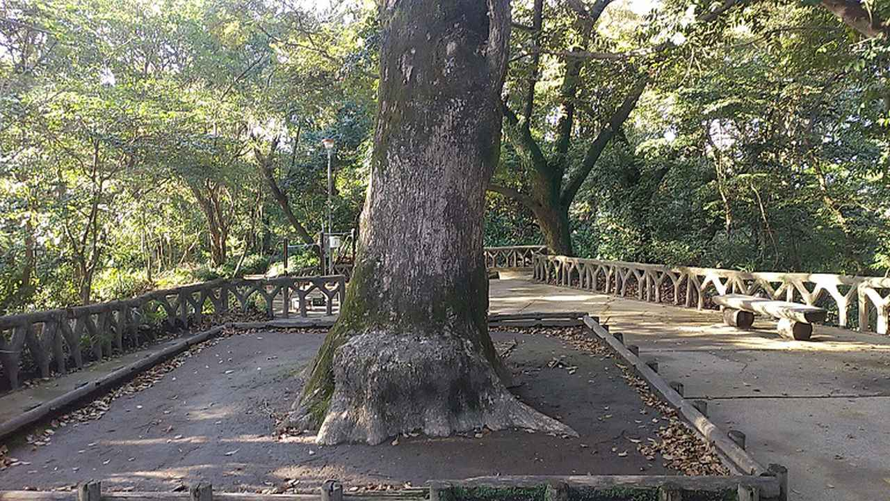 画像4: 来年春の企画の素材を探して鹿児島の 城山 に行ってきました!