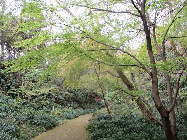 画像8: 本日は能見堂緑地から大丸山の下見のご報告です!