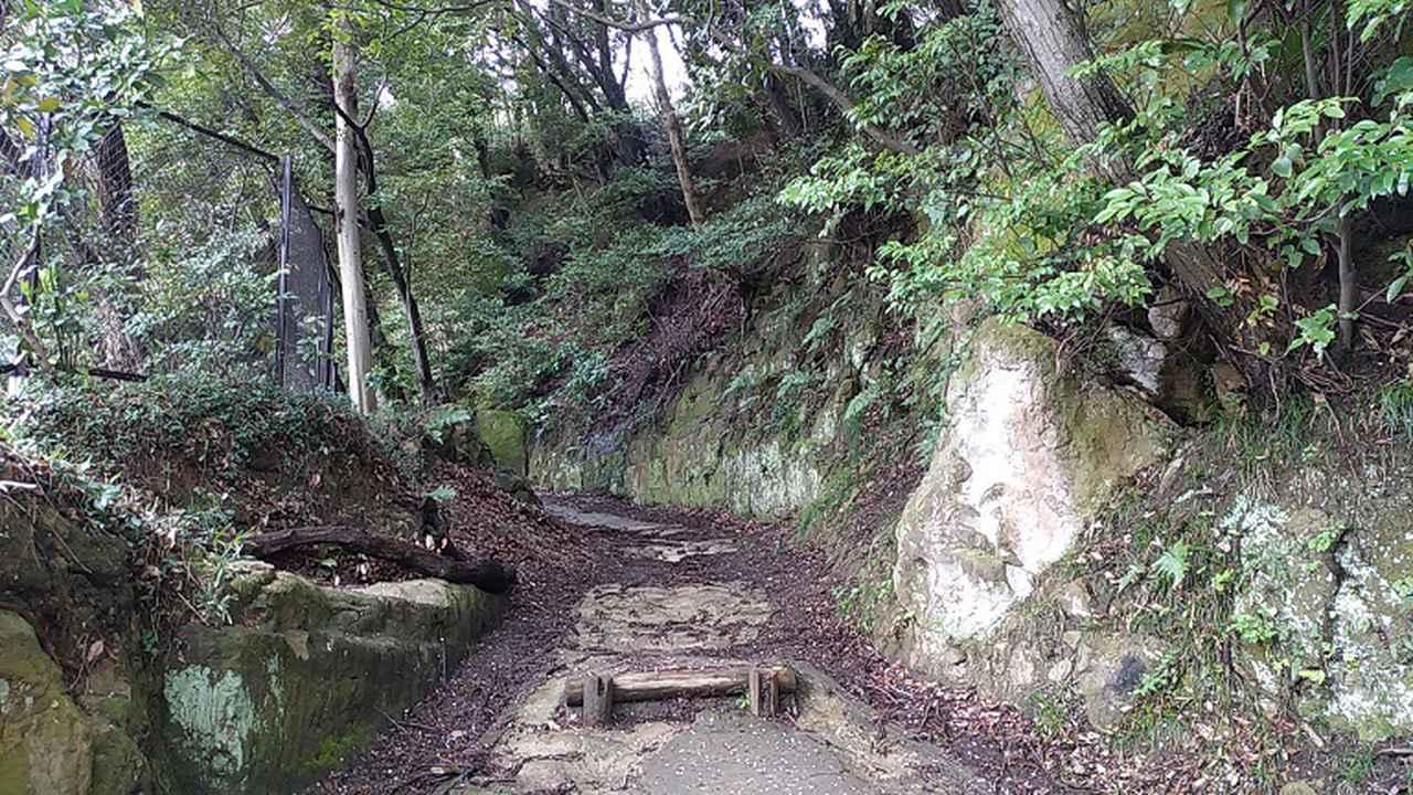 画像2: 本日は能見堂緑地から大丸山の下見のご報告です!
