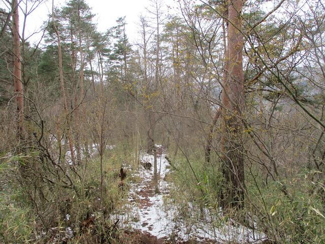 画像10: 来年春の企画の素材を探して 都留アルプス を歩いてみました!