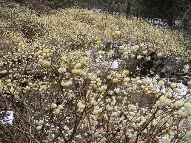 画像12: 来年春の企画の素材を探して 都留アルプス を歩いてみました!