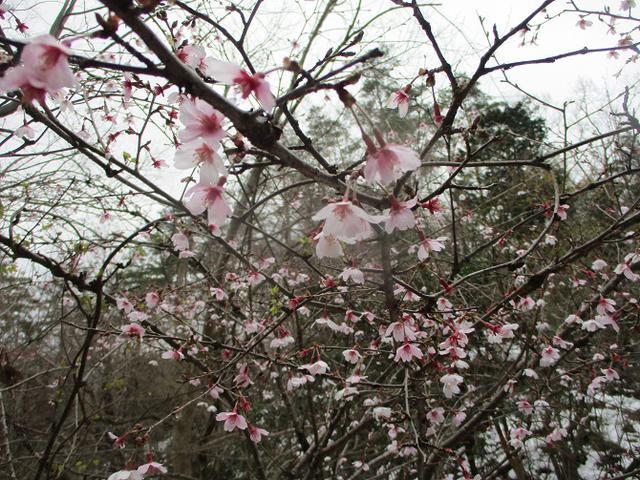 画像6: 来年春の企画の素材を探して 都留アルプス を歩いてみました!