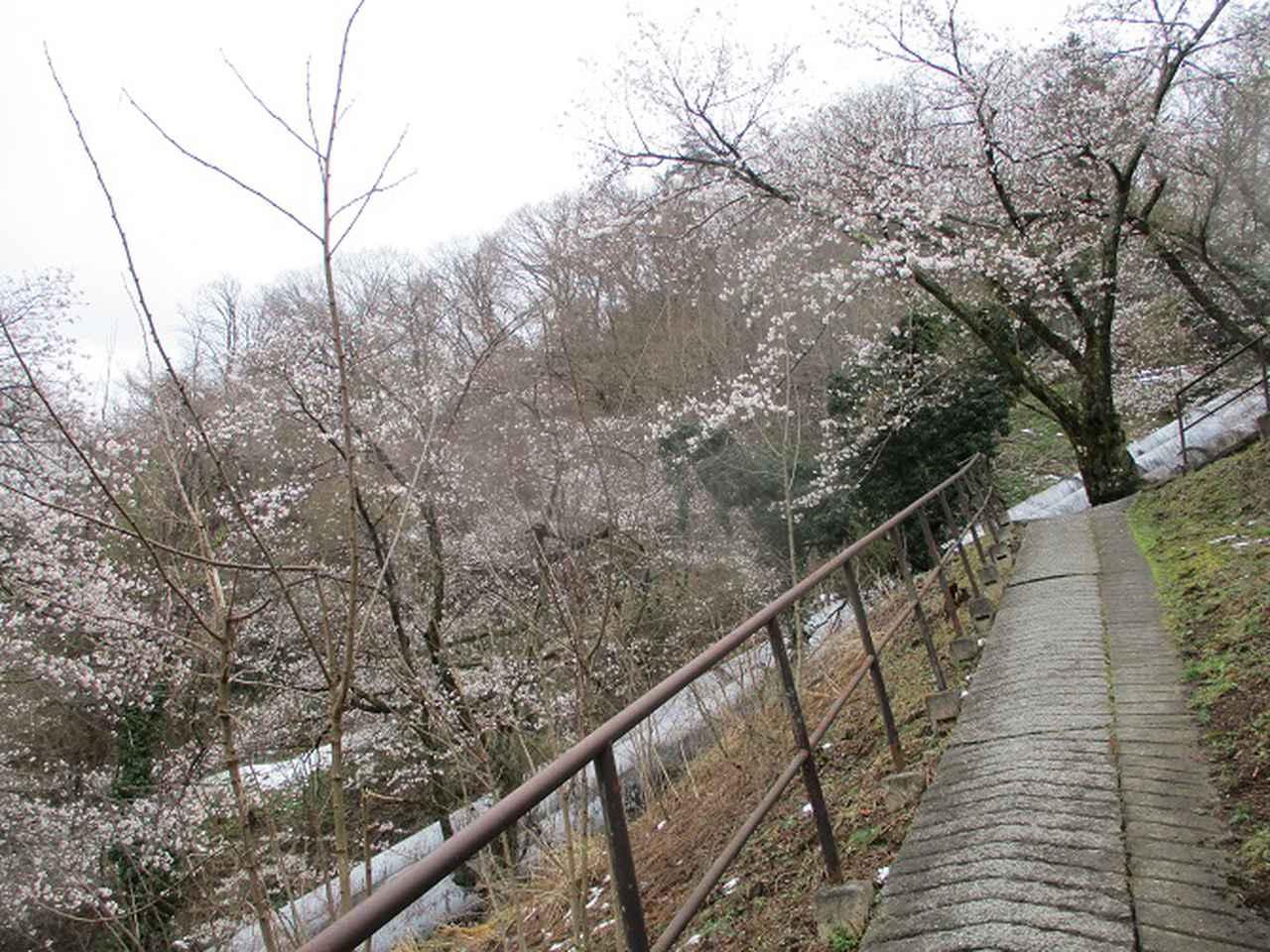 画像2: 来年春の企画の素材を探して 都留アルプス を歩いてみました!
