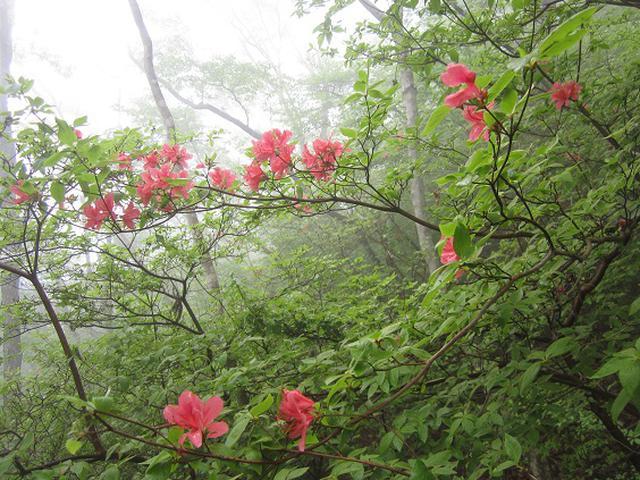 画像7: 本日は5月のツアーの栃木県の 古賀志(こがし)山 のご案内です!