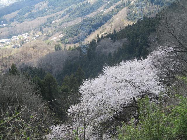 画像7: 岡田ガイドのコースで 陣見山 ツアーに行ってきました!
