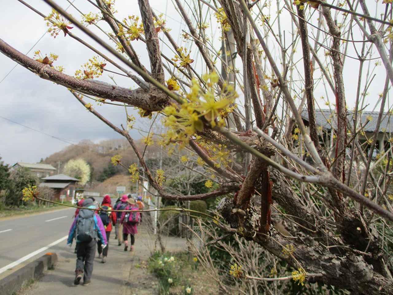 画像3: 岡田ガイドのコースで埼玉県にたたずむ 陣見山 へ行ってきました♪