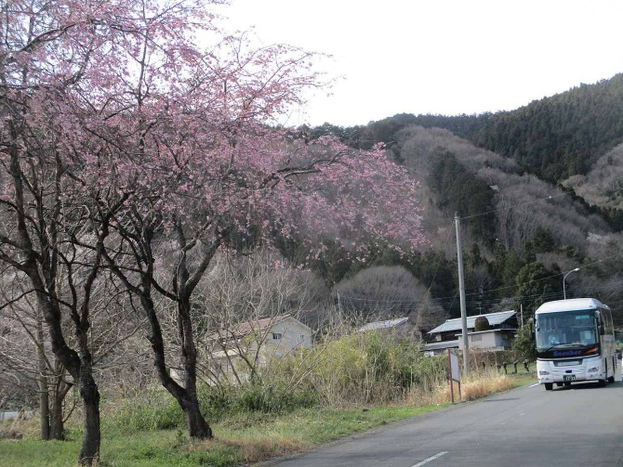画像13: 岡田ガイドのコースで 陣見山 ツアーに行ってきました!