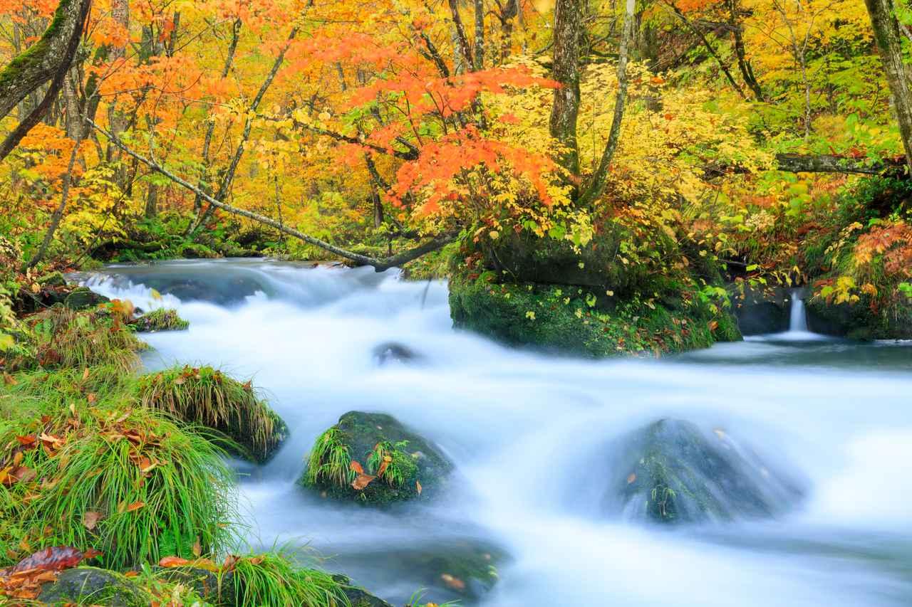 画像: 紅葉が美しい奥入瀬渓流(イメージ)
