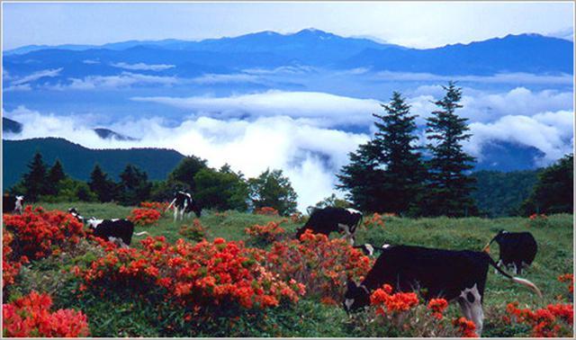 画像: 中央アルプス・八ヶ岳エリアの百名山8座を全てご紹介!
