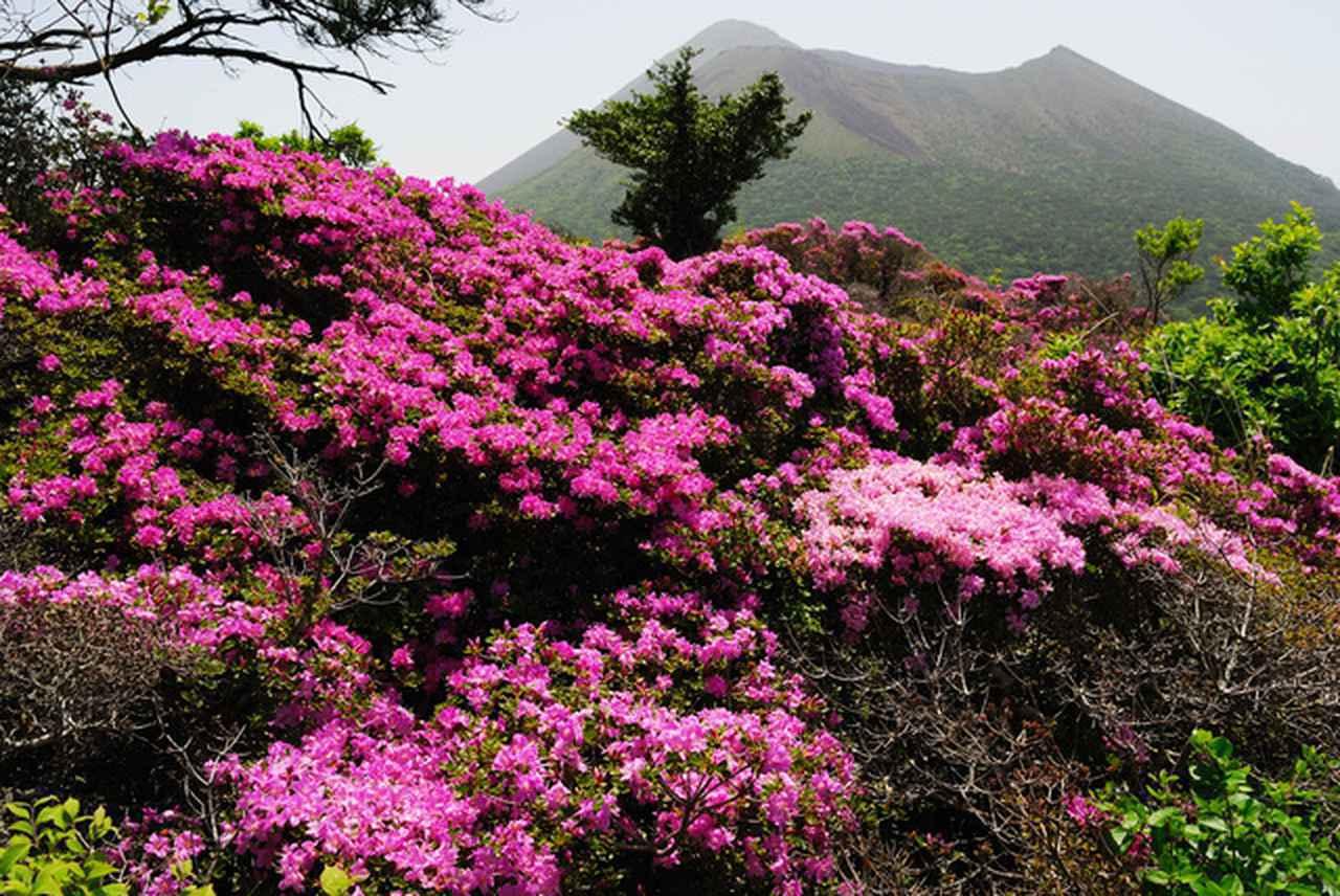 画像: 高千穂峰のミヤマキリシマ