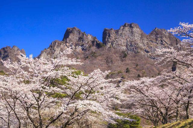 画像: 妙義山麓に咲く桜