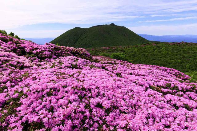 画像: 九重山とミヤマキリシマ