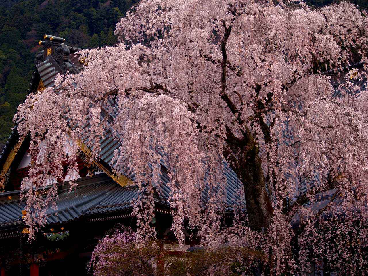 画像1: 春(3~5月)におすすめの山17選|春の花咲く登山・ハイキング!