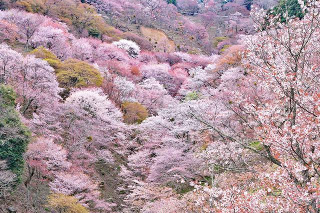 画像2: 春(3~5月)におすすめの山17選|花咲く登山・ハイキングを楽しもう!