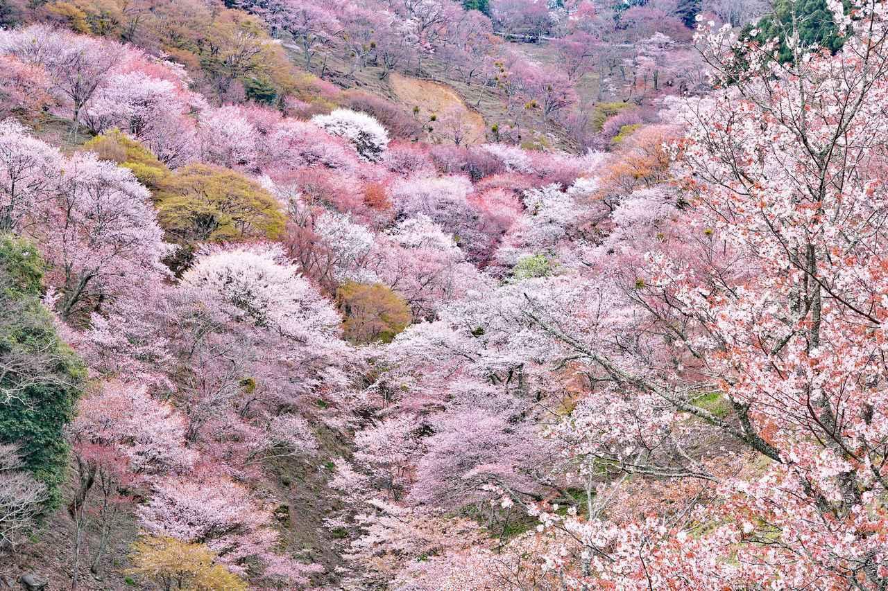 画像2: 春(3~5月)におすすめの山17選|春の花咲く登山・ハイキング!