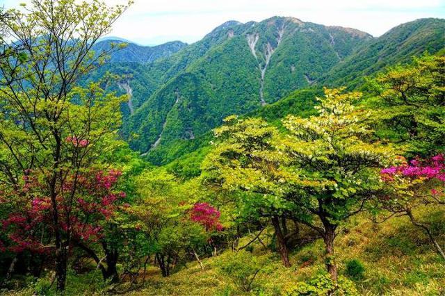 画像: 植生豊かな丹沢