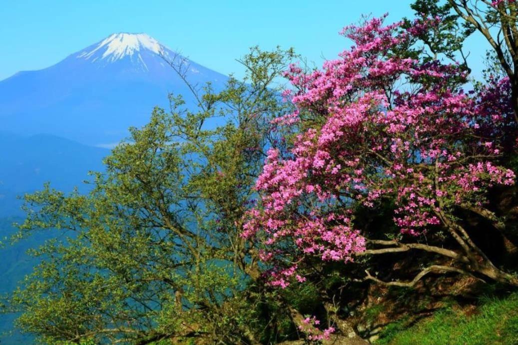 画像: 檜洞丸からのツツジと富士山