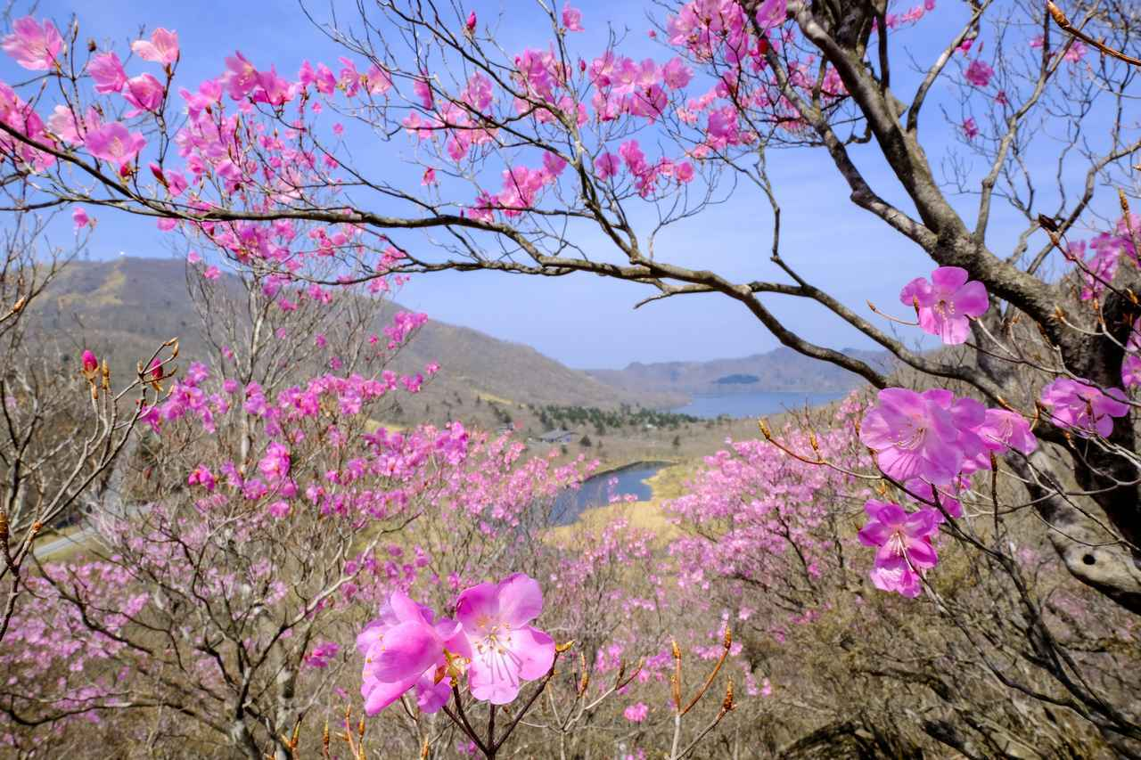 画像: 春(3~5月)におすすめの山17選|花咲く登山・ハイキングを楽しもう!