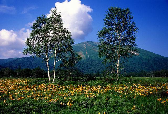 画像: 至仏山と尾瀬ヶ原のニッコウキスゲ