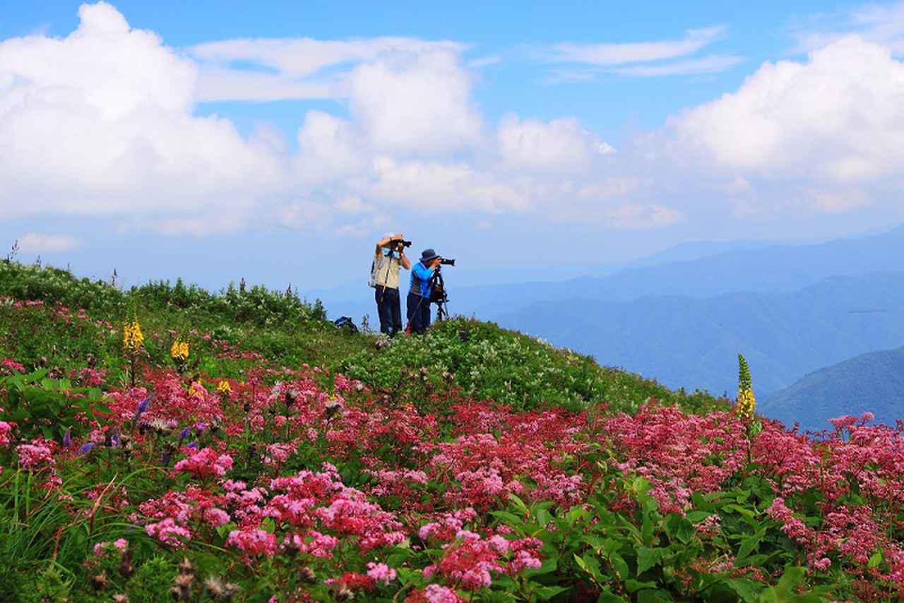 画像2: 花咲く伊吹山