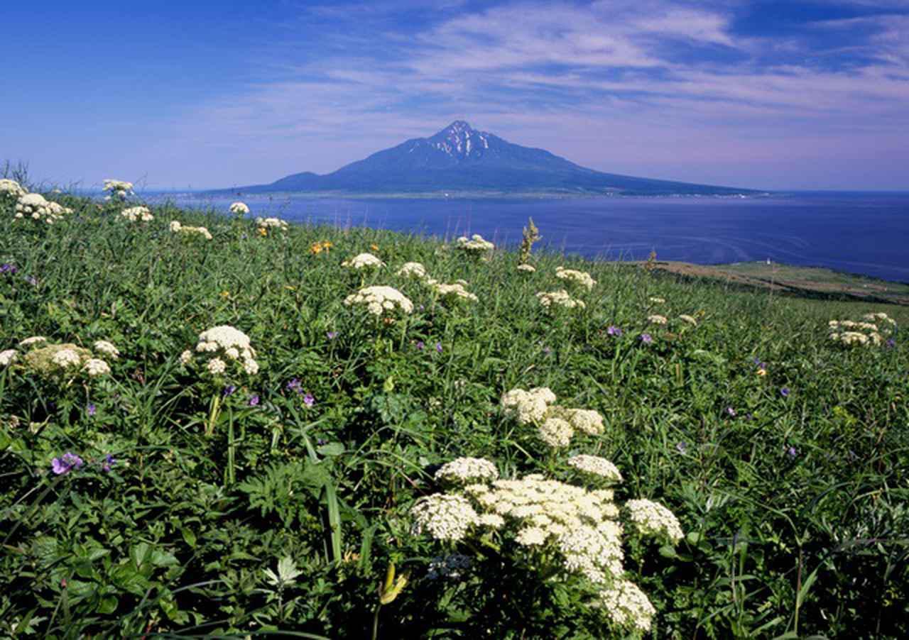 画像: 礼文島から見る利尻山