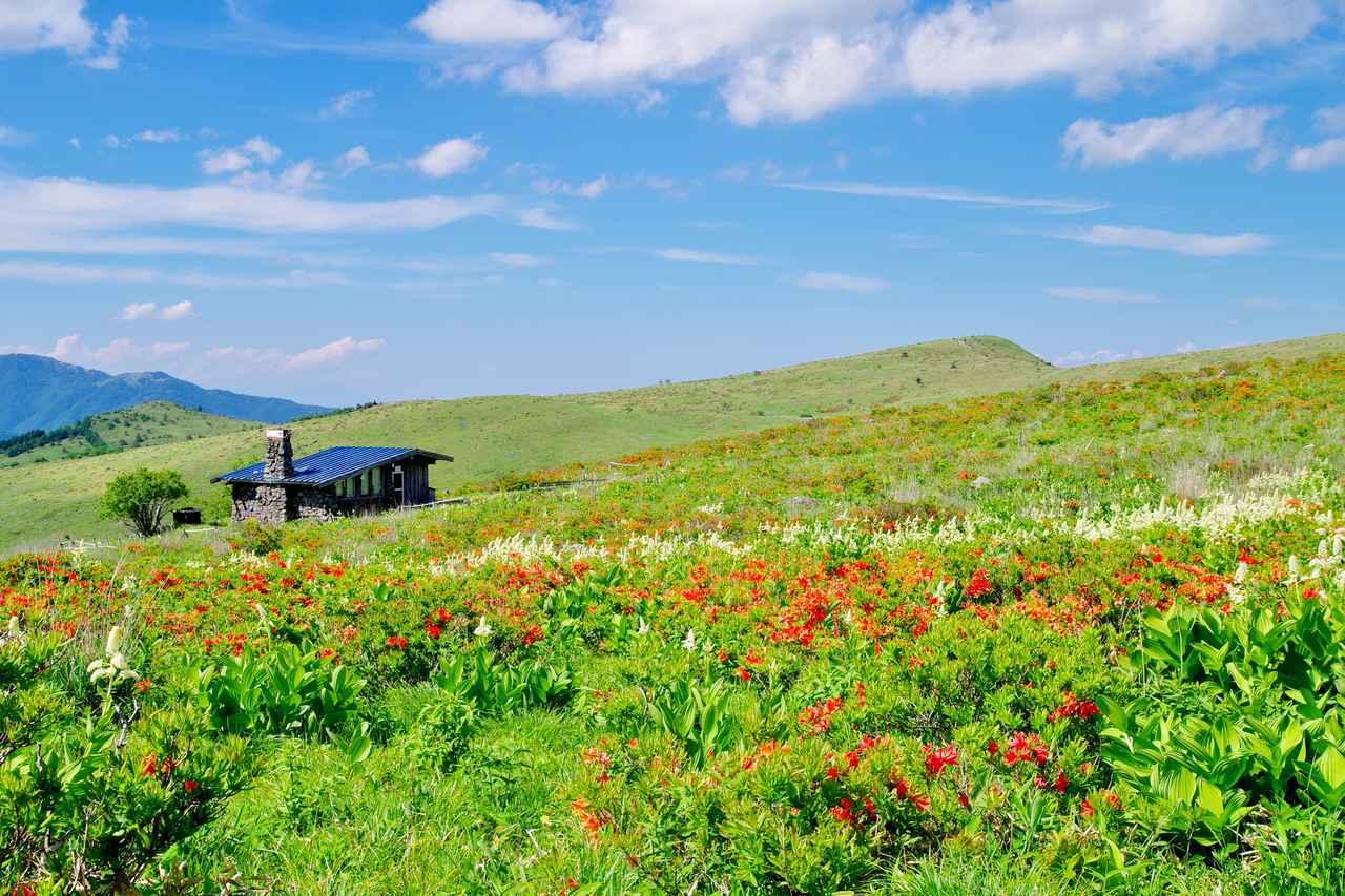 画像: 高山植物咲く霧ヶ峰高原