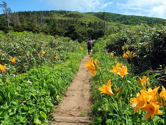 画像: フラワー(花)ハイキング・登山ツアー・旅行【関東発】│クラブツーリズム