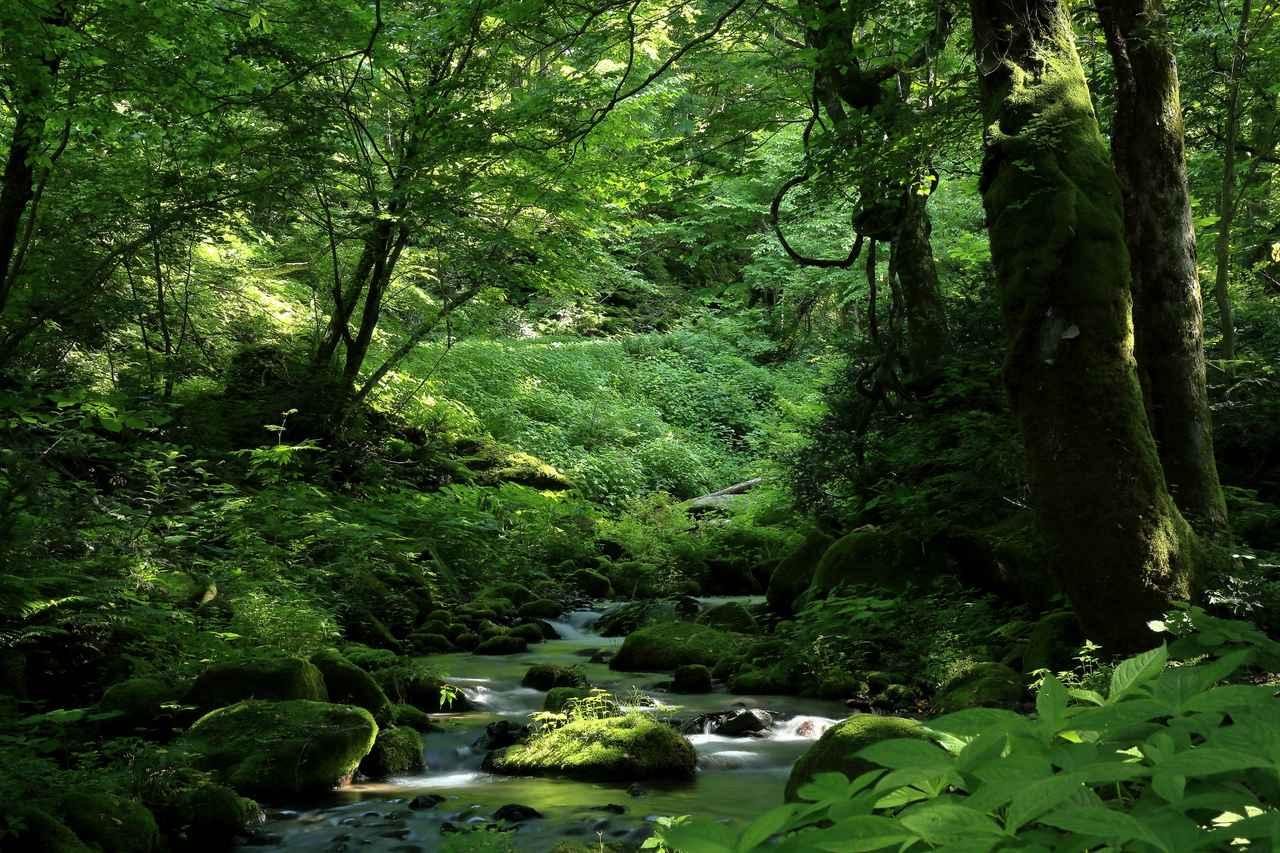 画像: マイナスイオンたっぷりの木谷沢渓流をハイキング